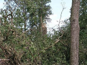 Verwijderen gevaarlijke bomen in Dommeldal