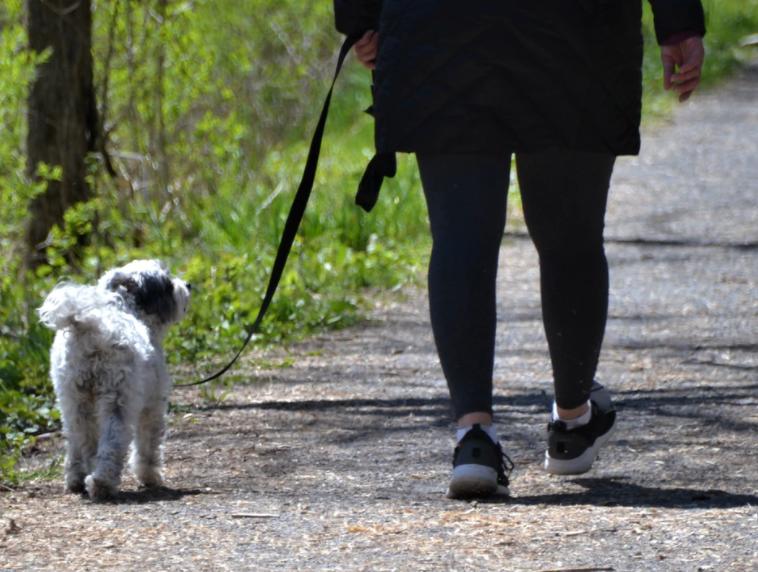 Controles op loslopende honden en hondenpoepoverlast